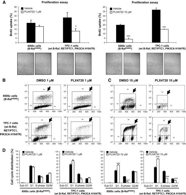 PLX4720 inhibits proliferation in thyroid cancer cells. (A–C): 1 μM PLX4720 reduced BrdU incorporation in TPC-1 cells (* p = .01); 10 μM PLX4720 reduced BrdU uptake in 8505c and TPC-1 cells (*** p