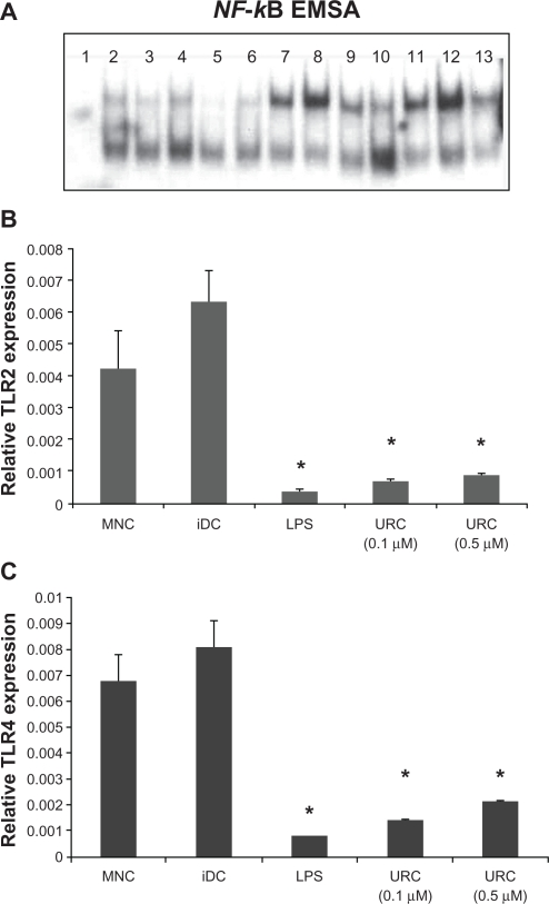 URC induces NF-κB activation and modulates TLR2 and TLR4. A ) DC were stimulated with URC (0.5 μM), LPS (100 ng/ml) or medium for 30 min, 1 h and 2 h, and nuclear extracts were analyzed for their NF-κB binding activity using EMSA. 1: Competition (×100 cold) negative control 2: immature DC (0 min), 3: immature DC (30 min) 4: immature DC (1 h) 5: immature DC (2 h) 6: LPS (0 min) 7: LPS (30 min) 8: LPS (1 h) 9: LPS (2 h) 10: URC (0 min) 11: URC (30 min) 12: URC (1 h) 13: URC (2 h). B ) Relative TLR expression during the differentiation of DC. Monocytes were cultured with GM-CSF and IL-4 to differentiate to immature DC for 8 days. Maturation of DC was induced by URC (0.1 μM and 0.5 μM) or LPS (1 μg/ml). Cells were collected at indicated time; mRNA were extracted and converted to cDNA. The cDNA were subjected to Realtime SYBR Green quantitative PCR using gene-specific primers pair for TLR2, TLR4 and β-actin. Relative gene expression was calculated using 2 −ΔΔCt method. Left panel: Relative TLR4 expression during differentiation of DC by LPS and comparison calculation involved finding the stimulation of DC between LPS and URC. Right panel: Relative TLR2 expression during differentiation of DC by LPS and comparison calculation involved finding the stimulation of DC between LPS and URC. Data are the mean ± S.E.M. of three independent experiments. Note: * P