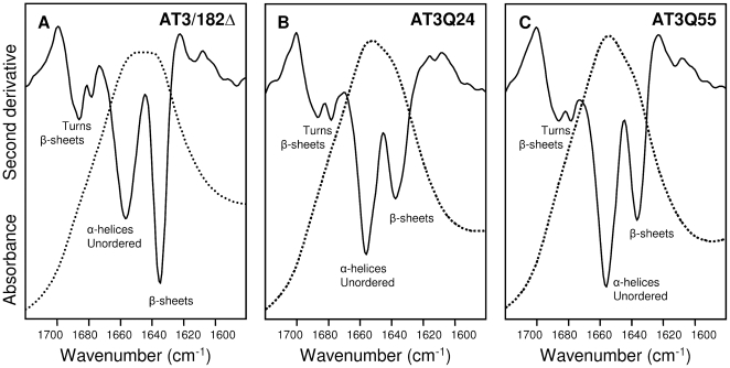 FTIR spectra of freshly purified AT3 variants. Absorption spectra (dotted line) and their second derivatives (continuous line) in the amide I region of AT3 variants: JD (A), AT3Q24 (B), and AT3Q55 (C). Band assignment to the secondary structure components is indicated.