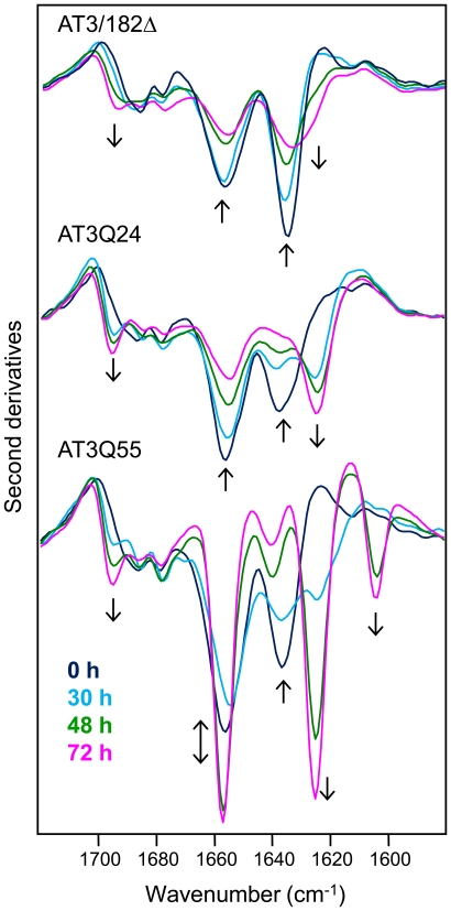 Kinetics of aggregation of AT3 variants monitored by FTIR spectroscopy. Second derivative spectra of AT3 variants were taken at different times of incubation in PBS at 37°C. Arrows point to increasing time.