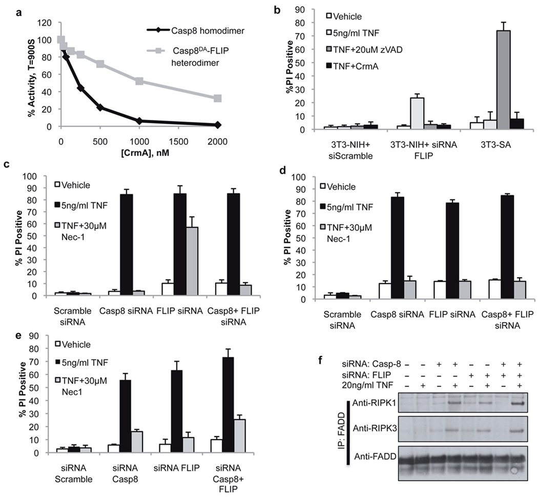 The FLIP-Caspase-8 heterodimeric complex suppresses RIPK3-dependent cell death a . Inhibitory effect of CrmA on FKBP-Caspase-8 homodimers or caspase-8 DA -FLIP heterodimers induced by dimerizer treatment of purified recombinant protein. b . Cell death (PI uptake) of RIPK3-deficient (NIH) or RIPK3 expressing (SA) 3T3 cells treated as indicated for 12h. (Error bars are s.d., n=3) c, d, e. Cell death (PI uptake) of 3T3-SA cells stably expressing vector ( c ) or CrmA ( d ), or anti-apoptotic Bcl-XL ( e ) following transfection with the indicated siRNA and treatment with TNF and the RIPK1 inhibitor Nec-1 as indicated for 24h. (Error bars are s.d., n=3) f. 3T3-SA cells expressing Bcl-XL were subjected to immunoprecipitation of FADD following transfection of siRNAs to caspase-8 and FLIP and treatment with TNF for 90 minutes as indicated. Immune complexes were resolved by western blotting with the indicated antibodies. The data presented are representative of results obtained with either of 2 separate siRNAs to both caspase-8 and FLIP.