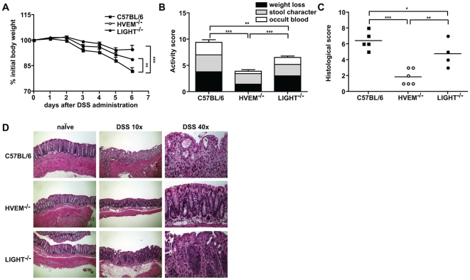 HVEM -/- mice are resistant to DSS-induced colitis. C57BL/6, HVEM -/- and LIGHT -/- mice were given 5% DSS in the drinking water for 4 days, then returned to normal drinking water and sacrificed at day 6. (A) Body weight loss was monitored daily and is expressed as percentage change from initial body weight at day 0 for C57BL/6 (closed squares), HVEM -/- (open circles) or LIGHT -/- (closed circles). (B) Clinical activity scores were assessed at the time of sacrifice by a combination of total weight loss, stool character and occult blood. (C) Histological scores indicating immuno-pathology were calculated as described in the Materials and Methods and are shown for the distal part of the colon of individual mice for C57BL/6 (closed squares), HVEM -/- (open circles) or LIGHT -/- (closed circles). (D) Representative H E staining of distal colon tissue sections from control and DSS-treated mice. Scale bars are 10× magnification = 200 µm and 40× magnification = 0.05 µm. Data in (A), (B) and (C) represent the mean ± SD of one experiment (n = 4-6 mice per group) out of three independent experiments. Statistically significant differences between groups were assessed by a two tailed Student's t test: * p