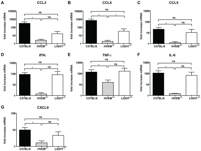 HVEM is required for DSS-induced pro-inflammatory cytokine and chemokine production. C57BL/6, HVEM -/- and LIGHT -/- mice were given 5% DSS in the drinking water for 4 days, then returned to normal drinking water. At day 6 mice were sacrificed and the colon removed for RNA isolation. (A) CCL3, (B) CCL4, (C) CCL5, (D) IFNγ, (E) TNFα, (F) IL-6 and (G) CXCL9 gene expression in the distal colon was analyzed by quantitative RT-PCR for C57BL/6 (black bar), HVEM -/- (grey bar) and LIGHT -/- (white bar) mice. For each individual sample, gene expression was normalized relative to β-Actin. Values represent fold increases in mRNA expression over the corresponding untreated controls. Means ± SD are shown for two independent experiments (n = 8–10 mice per group) out of three independent experiments. Statistically significant differences between groups were assessed by a two tailed Student's t test: * p
