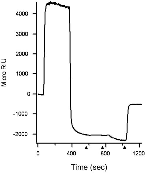 PBA does not block the dissociation of CTA1 from CTA2/CTB 5 . After appending CT to a GM1-coated SPR sensor slide, a baseline measurement corresponding to the mass of the holotoxin was recorded. Reduced PDI was then perfused over the slide in the presence of 100 µM PBA. PDI was present in the perfusion buffer until approximately 500 sec into the experiment, after which it was replaced with sequential additions of an anti-PDI antibody, an anti-CTA antibody, and an anti-CTB antibody (arrowheads). One of two representative experiments is shown.