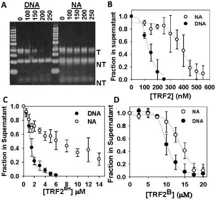 "TRF2 stimulates self-association of DNA and nucleosomal arrays. Differential centrifugation assay as described in Materials and Methods . 1% agarose gel of samples with indicated amounts of TRF2 in nM where ""T"" refers to telomeric and ""NT"" refers to non-telomeric fragments ( A ). Quantification of experiments with TRF2 ( B ) TRF2 BH ( C ) and TRF2 B ( D ). Each data point represents the mean ± 1 SD from 3 separate experiments."