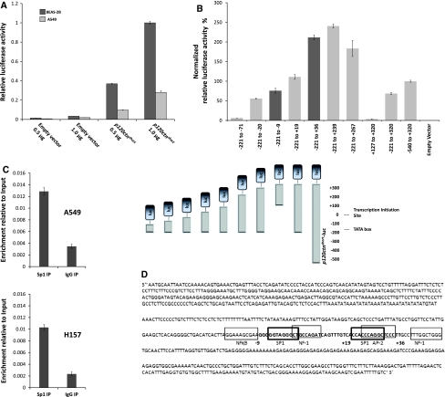 a Promoter analysis of p120ctn in A549 (NSCLC) and BEAS-2B (immortalized normal human epithelium) cell lines. Results are normalized for transient transfection efficiency (i.e. firefly luciferase activity) by co-transfection of a Renilla luciferase expressing control vector (pRL-SV40). Numbers on horizontal axis indicate quantity of DNA transfected. Promoter activity of A549 cells are significantly reduced compared to BEAS-2B cells. b Analysis of p120ctn promoter by creating serial deletion constructs. These deletion constructs of full length p120ctn promoter were prepared by deletions from both 5′ and 3′ ends of the p120ctn short -luc construct. Both A549 and BEAS-2B cells were transfected with this mutant constructs and 24 h later cells were lysed and subjected to dual Luciferase assay, data only shown for A549 cells. Relative promoter activity is normalized to full length promoter activity in A549 cells. p120ctn promoter activity significantly changes upon deletion segments (−9 to +36) and (+267 to +320). c Chromatin immunoprecipitation (ChIP) in A549 and H157 cells; immunoprecipitation with anti-SP1 antibody or IgG control, PCR with primers encompassing segment (−56 to +111) of the p 120ctn promoter. Error bars represent 95% confidence interval.SP1 binds to the p120ctn promoter. d Schematic view of the p120ctn core promoter region and putative cis -acting elements both at the 5′ and 3′ sides of transcription initiation site that were predicted by Alibaba2 analysis. Binding sites for transcription factors NF-1, AP-2 and SP1 are predicted within segment (−9 to +36) of the p120ctn promoter