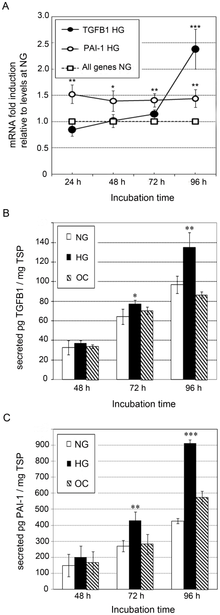 Effect of glucose on TGFB1 and PAI-1 expression in MC. ( A ) Relative quantification of TGFB1 and PAI-1 mRNA by TaqMan qPCR. The mRNA level for all the genes was arbitrary set to 1 under NG conditions at each time point. Data are presented as mRNA fold-increase in MC incubated in HG or NG OC conditions. Quantification of secreted TGFB1 ( B ) and PAI-1 ( C ) proteins by sandwich ELISA. Data are expressed as picograms of PAI-1 or TGFB1 per total soluble protein (TSP). Results represent average of three independent experiments. Data are means ± SD. A.U.: arbitrary units. * P