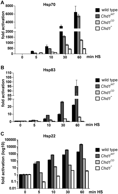 HS-induced transcription of Hsp70, Hsp83 and Hsp22 genes is decreased in Chd1 -deficient and Chd1 C D -rescued larvae. Larvae bearing the indicated transgenes in a Chd1 2 /Exel7014 genetic background and wild-type larvae were subjected to the indicated periods of HS before <t>RNA</t> was prepared and expression of the HS genes was analyzed by real-time <t>PCR.</t> All values were normalized against the non-HS (0) sample of the respective fly strain. Error bars indicate standard deviations of three independent experiments. ( A ) Hsp70 , ( B ) Hsp83 and ( C ) Hsp22 .