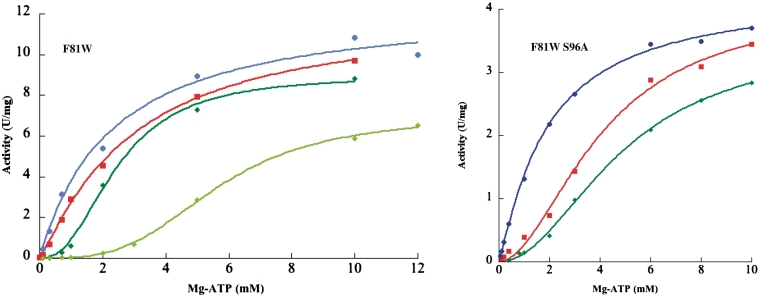 F81W and F81W S96A variant activity versus Mg-ATP concentration. The concentrations of effectors were 0.5 mM GTP (dark blue), 1 mM GTP (light blue), no effector (red), 0.2 mM UTP (dark green) and 1 mM UTP (light green). Same conditions as Figure 1 .