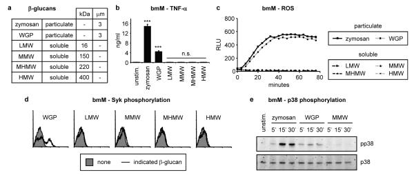 Particulate, but not soluble, β-glucans induce Dectin-1 signalling a Size (molecular weight or diameter) of β-glucan preparations used in this study. b-e Bone marrow-derived macrophages (bmM; b-d IFN-γ-primed overnight) were stimulated with 50 μg/ml β-glucans. b TNF-α production (24 h) was assessed by ELISA; data are means plus standard deviations of triplicate culture (*** p