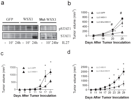 IL27-independent and WSX1-dependent tumor growth promotion. ( a ) Comparison of IL27 signaling function between WSX1- and DN-WSX1 cells. Equal amounts of cell extracts of LLC cells expressing GFP, WSX1, or DN-WSX1 were treated with IL27 for 10 minutes (10′), overnight (24 hr), or left untreated (-), and then analyzed using WB techniques and probed with pSTAT1 and STAT1 antibodies. ( b ) Comparison of tumor growth between LLC-GFP, LLC-WSX1, and LLC-MUT in wildtype C57Bl/6 mice (N = 5). Representative of two independent experiments. ( c ) Comparison of tumor growth between LLC-GFP and LLC-WSX1 in TCCR −/− mice (N = 4). ( d ) Comparison of tumor growth between LLC-WSX1 and LLC-MUT in TCCR −/− mice (N = 4). Points, mean; bars, SE. *, P
