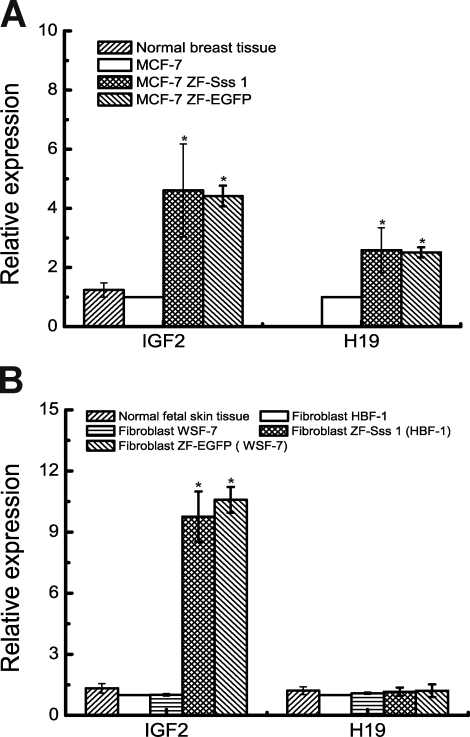 Real-time <t>PCR</t> quantitation of IGF2 and H19 mRNA transcripts. IGF2 , H19 , and the housekeeping β-actin genes were coamplified from each cDNA synthesized from normal tissue (human breast and skin), control, and decoy <t>CTCF–expressing</t> cells in MCF7 (A), HBF1, and WSF7 cells (B). IGF2 and H19 were quantitated in duplicate for each sample and were determined by a ΔCT and Δ2ΔCT calculation with reference to human β-actin gene control. IGF2 and H19 expression was normalized and presented as the number by using the IGF2 and H19 level in controls (white) as 1 (tissue, n = 6; control, n = 6; treatment, n = 6). *, P