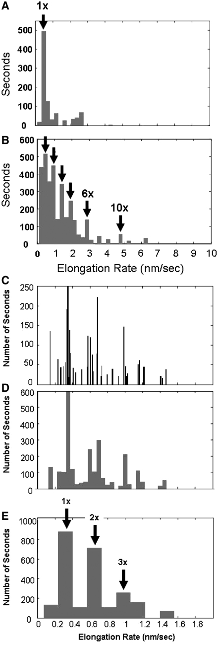 Histogrammed slopes of extension versus time obtained for several experiments where the elongation at constant forces between 20 and 40 pN was measured in 1 µM RecA, 1 mM ATPγS and 10 mM MgCl 2 at pH 7.6. ( A ) Slopes at times > 1000 s at constant force, where the dominant peak at 0.48 nm/s (1×) differs from the average by 2 SDs. ( B ) Slopes at times 10–400 s at constant force, where arrows mark slopes at 1×, 2×, 3×, 4×, 6× and 10× integer multiples of the dominant rate. ( C ) Slopes of extension versus time measured in 1 mM ATP and 10 mM CaCl 2 , showing the 1×, 2× and 3× multiples of the dominant rate of 0.33 nm/s, 0.010 nm/s bin size; ( D ) 0.050 nm/s bin size; ( E ) 0.165 nm/s bin size, where the arrows show the integer multiples of the 1× rate.