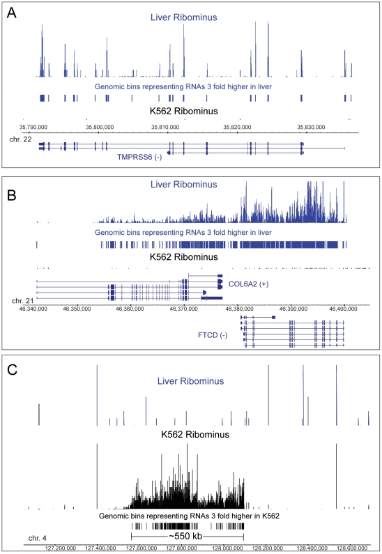 Analysis of expression using genomic bins. Three different genomic regions (A, B, C) are compared for expression with RiboMinus depleted RNA from liver and K562 samples. The vertical bars of varying heights show the expression level in each bin and the constant height bars designate those bins which are over-expressed at least 3× in either sample. Known annotated genes are labeled. In C, there is a 550 kb region with no annotated genes which is highly expressed in K562 but not liver and corresponds to a very long intergenic region (vlinc) on chromosome 4 [28] . The corresponding chromosomes and the coordinates of the regions (hg18 version of the genome) are shown.