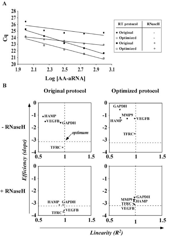 RNaseH improves qPCR efficiency . Different quantities of AA-aRNA from universal reference RNA (100-1000 ng) were used as inputs into either the original RT protocol or the optimized RT protocol, with or without RNase H treatment. Resulting cDNAs were diluted 10-fold and subjected to qPCR using primer pairs specific for VEGFB, MMP9, TFRC, HAMP and GAPDH. Cq values were plotted against the Log of the concentration of the AA-aRNA used for RT and linear regression was applied. qPCR efficiency (E) was calculated by the slope of the regression line. A slope of -3.2 indicates optimal efficiency. qPCR linearity (R 2 ) corresponds to the correlation coefficient of the regression line. A coefficient R 2 of 1 indicates optimal linearity. (A) Representative experiment using VEGFB primers. (B) Plots representing qPCR efficiency as a function of linearity for the 5 genes tested. Optimum conditions are indicated at the intersection of dotted lines corresponding to E = -3.2 and R 2 = 1. E was improved by RNase H treatment.