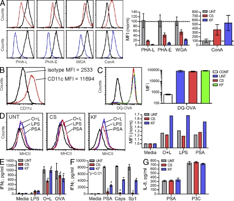 Native complex N-glycans are required for PSA-driven T cell activation in vitro. (A) BMDCs were cultured in the presence or absence of CS (red) and KF (blue) for 3 d, and then analyzed by PHA-L, PHA-E, WGA, and Con A lectin flow cytometry to detect N-glycans. Representative histograms and n = 4 MFI analyses are shown. (B) BMDCs were cultured for 8 d, probed with CD11c mAb, and analyzed by flow cytometry to verify proper DC cell differentiation. Representative histogram is shown. (C) BMDCs were incubated with nonfluorescent intact DQ-OVA protein for 24 h to allow uptake and processing. Cells were then analyzed for fluorescence, which is indicative of endocytosis and cleavage to peptides. Representative histograms are shown. n = 4 for MFI analyses. (D) BMDC maturation upon exposure to antigen was measured by surface staining of MHCII 24 h after stimulation with OVA peptide and LPS (O+L), LPS alone, or PSA. Representative histograms shown. (E) BMDCs grown with and without CS and KF were pulsed with either DQ-OVA (OVA), OVAp+LPS (O+L), or LPS alone for 24 h, after which untreated fresh naive CD4 + T cells isolated from OT-II animals were added. n = 3 per condition, per antigen. (F) As with OVAp, BMDCs were grown with CS and KF and pulsed with PSA, Sp1, or B. fragilis capsule (Caps) for 24 h. Next, naive WT C57BL/6 CD4 + T cells were added to allow activation to occur. n = 3 per condition. (G) TLR2 activation by PSA, a necessary step in GlyAg-mediated T cell activation ( Wang et al., 2006 ), and a control agonist Pam3Cysk4 (P3C) was measured in untreated (UNT), CS-treated, or KF-treated TLR2 + HEK293 cells. Bars represent background-subtracted values. n = 3 per condition. All bar graphs show the mean ± SEM.