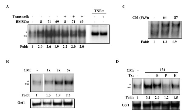 MM BMSC-induced NF-κB activity is mediated by a secreted peptide factor .(A) EMSA of NF-κB activity in RPMI8226 cells cultured alone or with BMSCs from the indicated MM patients, either directly, or physically separated by a Transwell insert (