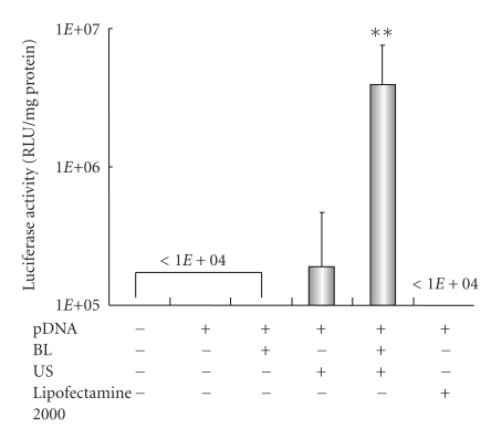 Luciferase expression in HFLS transfected with bubble liposomes and ultrasound exposure compared with Lipofectamine 2000. pDNA (pCMV-Luc) and BL were mixed together with culture medium and added to the HFLS. The cells were immediately exposed to US (frequency, 2 MHz; duty, 50%; intensity, 2.5 W/cm 2 ; US exposure time, 10 sec.). The cells were washed and cultured for 2 days, and then luciferase activity was determined as described in Section 2 . The transfection of pDNA by LF2000 was also performed according to the manufacturers' instructions. All data are shown as the mean ± SD ( n = 4). ** P