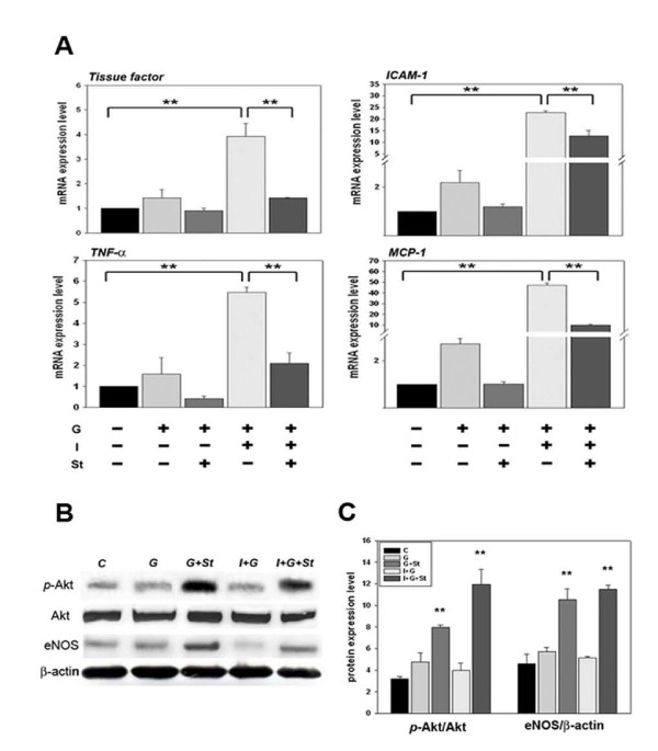 Cardiac mRNA analysis for inflammatory markers and protein analysis for AKT and eNOS expression in I+G mice compared with I+G plus simvastatin treated mice . (A) Total mRNAs were prepared from whole heart tissues, and the levels of ICAM-1, MCP-1, tissue factor, and TNF-alpha transcripts were determined by Quantitative-PCR analysis. Note that the levels of four transcripts, especially of tissue factor and TNF-alpha reduced significantly after simvastatin administration. GADPH expression was used as a control to monitor RNA quality and concentration; **p