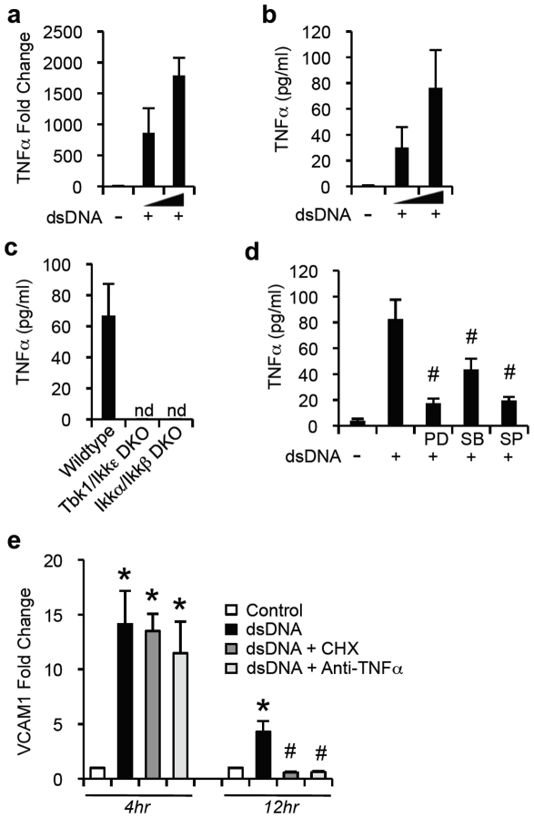 dsDNA mediated TNFα secretion for sustained secondary activation of the endothelium. (a) Q-PCR for expression of TNFα in endothelial cells after stimulation with dsDNA (.5 or 4 µg/ml) or mock transfected with Lipofectamine for 12 hours. (b) ELISA for TNFα in culture supernatant of endothelial cells stimulated with dsDNA (.5 or 4 µg/ml) or mock transfected with Lipofectamine for 24 hours. (c) ELISA for TNFα in supernatants of wildtype MEFs (WT), TBK1/IKKε DKO MEFs (TBK1/IKKε DKO), and IKKα/IKKβ DKO MEFs (IKKα/IKKβ DKO) stimulated with 4 µg/mL of dsDNA for 24 hours. (d) ELISA for TNFα in supernatants of endothelial cells after stimulation with dsDNA (4 µg/ml) for 24 hours in the presence or absence of PDTC (PD), SB202190 (SB) or SP600125 (SP) which are inhibitors of NFκB, p38 MAPK and JNK pathways, respectively. (e) Q-PCR for expression of VCAM1 in endothelial cells stimulated with dsDNA (1 µg/ml) for 4 or 12 hours, in the presence or absence of TNFα neutralizing antibody (+Anti-TNFa) or cycloheximide (+CHX). (*P