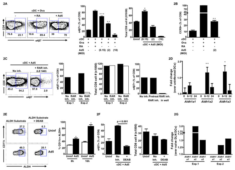 Ad5 endows splenic conventional DC (cDC) with the capacity to imprint gut homing potential on antigen-specific CD8 T cells via a retinoic acid (RA) dependent pathway Splenic cDCs isolated from C57BL/6 mice were either left uninfected or infected with Ad5 (non-recombinant) for 8hrs. Following infection, cells were washed and co-cultured with OT-I T cells (CD8) in the presence of the OVA peptide for 72 hrs. (A) Representative FACS plots (left panel) showing cell surface expression of α4β7on OT-I T cells 3 days after co-culture. Cells were gated on total CD8 T cells. Middle panel, mean frequency of α4β7 + cells (gated on total live CD8 lymphocytes) following co-culture with either uninfected cDCs or Ad5-infected cDCs at indicated MOIs. Right Panel, total live (Via-Probe negative) CD8 T cell number at the end of the co-culture primed by cDCs infected with different MOIs. (B) Mean frequency of CCR9 + cells (gated on total live CD8 lymphocytes) following co-culture with either uninfected cDCs or Ad5-infected cDCs at MOI 2. (C) Representative FACS plots (left panel) showing α4β7 expression on total live CD8 T cells following co-culture with Ad5-infected cDCs (MOI 0.15) in the absence or presence of retinoic acid receptor (RAR) inhibitor LE540. Middle panel, frequency of α4β7 + CD8 T cells in the absence or presence of LE540 (inhibitor included in the co-culture). Total live (Via-Probe negative) CD8 T cell number in the absence or presence of LE540 at the end of the co-culture. Data from two independent experiments (Exp.1 and Exp.2) are shown. Right panel, frequency ofα4β7 + CD8 T cells with RAR inhibitor included either only during 8hrs of Ad5 infection and washed before co-culture (pre-treat) or left in the well during co-culture for 72hrs (in well). (D) Quantitative RT-PCR showing the fold change (mean of six independent experiments) in the expression of mRNA encoding retinal dehydrogenase (RALDH) enzymes ( Aldh1a1 , Aldh1a2 and Aldh1a3 ) in Ad5-infected cDCs over uninfected cDCs at 0, 6–12 and 24 hrs following in vitro infection. (E) Representative FACS plots (left panel) showing ALDH+ cells (gated on total CD11c+ cells) at 8hrs following in vitro Ad5 infection. The ALDH+ gate was determined based on the DEAB treated uninfected sample. Right panel, cumulative data (mean) for three independent experiments. (F) Mean frequency of α4β7 + CD8 T cells following co-culture with either uninfected cDCs or Ad5-infected cDCs in the absence or presence of a RALDH inhibitor, DEAB (left panel). Right panel, total live (Via-Probe negative) CD8 T cell number in the absence or presence of DEAB at the end of the co-culture. (G) C57BL/6 mice were immunized with Ad5 (5X10 7 pfu per mouse) intramuscularly and draining lymph nodes (inguinal and popliteal pooled) were harvested at 12hrs post immunization. Quantitative RT-PCR showing the fold change in the expression of mRNA encoding retinal dehydrogenase (RALDH) enzymes ( Aldh1a1 , Aldh1a2 and Aldh1a3 ) in cDCs from Ad5-infected mice DLN over naïve mice DLN. Results from two independent experiments are shown (Exp.1 and Exp.2). Error bars indicate SEM. All data (except Fig. 2G) are representative of at least three independent experiments. * P