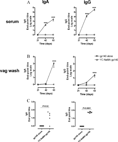 Systemic and mucosal humoral immune responses to gp140-adsorbed nanoparticles after intranasal immunization. (A) and (B) Kinetics of serum and vaginal IgG and IgA levels. Groups of 5 animals were immunized i.n. with 20 μg of gp140 either free or adsorbed to YC-NaMA NP. Serum and vaginal lavages were obtained before each immunization and 21 days after the last immunization, and tested for specific-gp140 IgG and IgA end-point titers by ELISA. Means were compared by two-way ANOVA. *** P