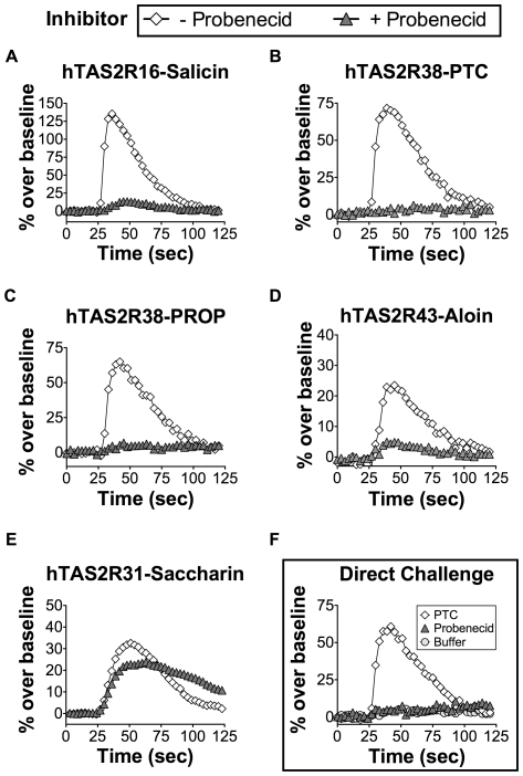 Inhibition of hTAS2R16, hTAS2R38, and hTAS2R43 by probenecid. HEK-293T cells were transiently transfected with Gα16gust44 and the indicated TAS2R receptors in a 384-well microplate. 22 hours post-transfection, calcium influx was measured in cells challenged with the indicated ligands in the presence (closed triangles) or absence (open diamonds) of probenecid (1 mM; 1 hour pre-incubation). Probenecid treatment completely attenuated (A) salicin-dependent (3 mM) calcium influx by the hTAS2R16 receptor and (B) PTC- (100 µM) and (C) PROP-dependent (30 µM) calcium influx by the hTAS2R38 receptor. (D) Probenecid treatment similarly attenuated aloin-induced (3 mM) hTAS2R43 signaling. (E) Probenecid treatment did not inhibit saccharin induced signaling of hTAS2R31. (F) hTAS2R38 transfected cells challenged with probenecid or buffer alone (1 mM) did not result in calcium influx, but do flux with the PTC control.