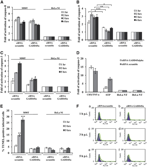 Gadd45 α triggers Shigella -mediated apoptotic cell death in infected HeLa cells. Activity of caspase-8 ( A ), caspase-9 ( B ) and caspase-3 ( C ), and TUNEL assay ( E and F ) on HeLa cells transiently transfected with a Gadd45 α or a scramble si RNA. Cells were infected with M90T at MOI of 100 for the reported time points. HeLa cells treated with STP or with CHX plus TNF- α , as detailed in Figure 2 , were used as a control ( D ). HeLa NI, non-infected HeLa cells. Report assay data correspond to the mean±S.D. (triplicate determinations) and are representative of three independent luminometric assays. * P