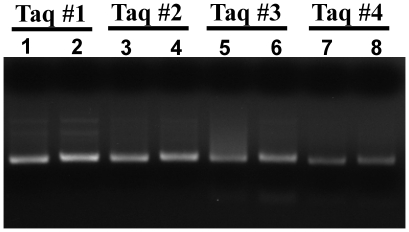 HotStart and low-DNA Taq DNA polymerases are not sufficiently pure for sensitive and specific broad-range amplification of bacterial DNA. The genomic DNA (100 fg) of S. aureus was amplified by HotStart or low-DNA Taq DNA polymerases (Taq #1: Hot Start Taq DNA polymerase, Protech Inc.; Taq #2: Fast Hot Start Taq DNA polymerase, KAPA Biosystems; Taq #3: Taq DNA polymerase, TakaRa Inc.; Taq #4: ULTRATOOLS Taq DNA polymerase, Biotools Inc.) using the primer set p201 and p1370 (lanes 1, 3, 5, and 7). Significant amount of PCR product was present in the no template control reactions (lanes 2, 4, 6, and 8).