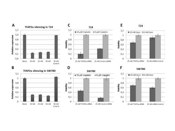 Cisplatin sensitivity of TFAP2α silenced T24 and SW780 . A and B: Transfection of 10-50 nM TFAP2α siRNA or control siRNA in T24 and SW780 cells, respectively. Real-time RT-PCR was used to determine the relative TFAP2α mRNA levels 48 h post transfektion. C and D: Transfection of 25 nM TFAP2α siRNA in T24 and SW780 cells, respectively. After 24 h incubation cisplatin or media was added to the cells. The viability of the cells was determined 96 h after transfection (48 h after the drug was added) by MTT-assay and expressed as the viability compared with the culture media control for both the TFAP2α siRNA or control siRNA transfected cells. E and F: As C and D using gemcitabine instead of cisplatin. (n = 6).