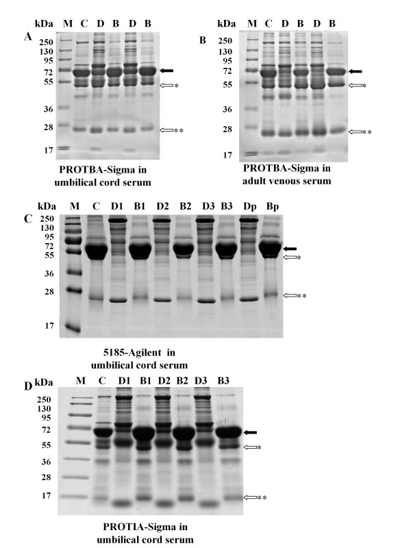 Comparison of depletion efficiency and repeatability of different kits on umbilical cord serum proteins samples by 1D-SDS-PAGE . Ten micrograms of crude, depleted or bound protein were loaded onto each lane and separated by 4-12% polyacrylamide gels. Proteins were visualized by Coomassie Blue staining. For examination of repeatability in umbilical cord serum depletion, the immunoaffinity columns (5185-Agilent and <t>PROTIA-Sigma)</t> were run three consecutive times with re-equilibration between depletion processes. However, for Blue Albumin and IgG Depletion Kit (PROTBA, Sigma-Aldrich, Saint Louis, MO, USA), serum samples were tested in two independent columns since its depletion efficiency was low even with a new column. A) Blue Albumin and IgG Depletion Kit (PROTBA, Sigma-Aldrich, Saint Louis, MO, USA) in umbilical cord serum depletion. B) Blue Albumin and IgG Depletion Kit (PROTBA, Sigma-Aldrich, Saint Louis, MO, USA) in adult venous serum depletion. C) Multiple Affinity Removal System (5185, Agilent, Santa Clara, CA, USA) in umbilical cord serum depletion. D) Immunoaffinity Albumin and IgG Depletion Kit (PROTIA, Sigma-Aldrich, Saint Louis, MO, USA) in umbilical cord serum depletion. Lanes: M: Prestained protein marker (Fermentas; 250, 130; 95, 72, 55, 36, 28, 17); C: Crude serum; D: Depleted serum; B: Bound proteins; D1-3: Depleted umbilical cord serum proteins of the first, second and third depletion process. B1-3: Bound proteins eluted from the column after the first, second and third depletion process. Dp: Depleted Proteins pooled by the three depletion processes. Bp: Bound proteins pooled by the three depletion processes Closed arrows: Protein band indicating albumin; Open arrows: Protein band indicating IgG; * heavy chain, and ** light chain.