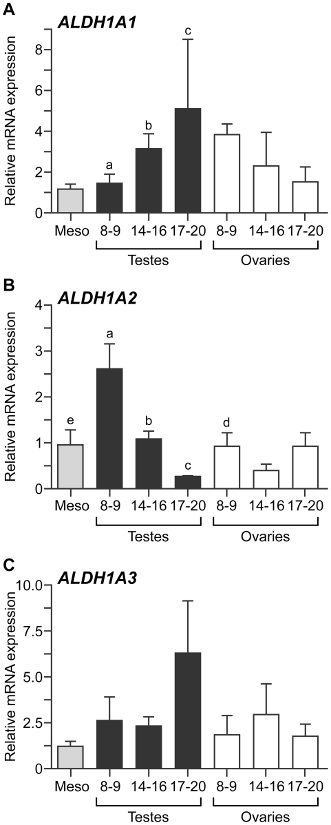 Expression of genes encoding retinaldehyde dehydrogenase enzymes in the human fetal gonad. qRT-PCR analysis reveals developmentally regulated expression of ALDH1A1 (A) in the human fetal testis, with transcript levels increasing significantly between 8–9 weeks gestation and 14–16/17–20 weeks gestation (ANOVA; a,b,c; p