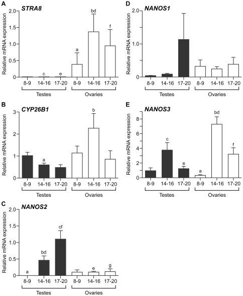Conserved and divergent patterns of expression of STRA8 , CYP26B1 and NANOS1-3 in the human fetal gonad. qRT-PCR analysis of human fetal gonads reveals female-biased and developmentally-regulated expression of STRA8 (A). STRA8 expression increased significantly between 8–9 and 14–16 weeks in the human fetal ovary (a vs b, p
