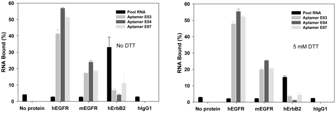 Binding specificity of <t>anti-EGFR</t> aptamers. The N62 pool and aptamers E03, E04, and E07 were assayed in triplicate by filtration for binding to <t>hEGFR,</t> mEGFR, hErbB2, and hIgG1. Average values and standard deviations are shown. Binding assays were carried out either in the absence (left) or presence (right) of DTT. A no protein control was also carried through the procedure. Percent binding was relative to the total RNA added.