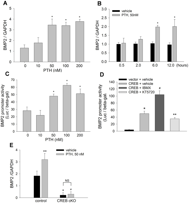 PTH up-regulates BMP2 expression through CREB. (A, B) BMP2 mRNA levels in C2C12 cells, treated with PTH at 0 to 200 nM for 12 hours (A); or PTH at 50 nM for 0 to 12 hours (B), were measured by real time PCR with GAPDH normalization. * p