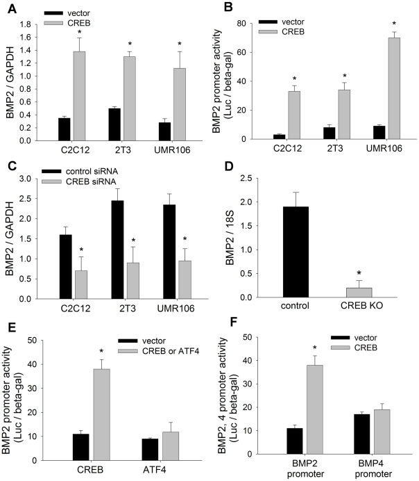 CREB activates BMP2 expression. (A) BMP2 mRNA levels in C2C12, 2T3 and UMR106 cells, transfected with CREB plasmid or vector for 24 hours, were measured by real time PCR with GAPDH106 cells. * p