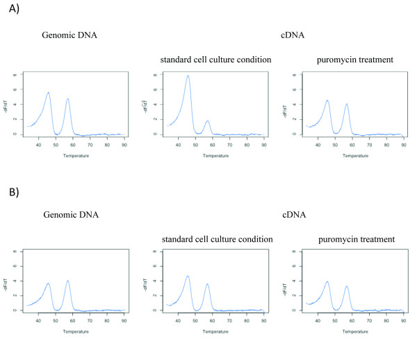 Non-sense mediated mRNA decay causes differential allelic expression in CHEK2*1100delC carriers . Allelic ratio measurements were performed on genomic DNA (gDNA), cDNA derived from LCLs in standard cell culture condition, and cDNA from LCLs treated with puromycin, an NMD inhibiting agent. (A) For a carrier of the mutation, comparison of gDNA and cDNA melting profiles supports the existence of DAE. Puromycin-cDNA profile resembles gDNA, supporting the role of NMD in the DAE observed in this individual. (B) The wild-type sample shows similar profiles in all three situations. HRM profiles were generated with the R script.