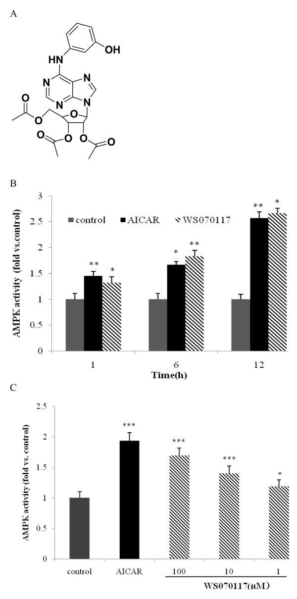 A novel structure compound, WS070117, activated AMPK in HepG2 cells . A : Structure of WS070117; B : Effect of WS070117 on AMPK activity in HepG2 cells detected by AMPK activity assays with SAMS peptide and [γ-32P]ATP used as substrates. HepG2 cells were treated with WS070117 (10 μM) for 1h, 6h and 12h. C : Effect of 12h treatment of WS070117 (1,10,100 μM) or AICAR (1 mM) on AMPK activity of HepG2 cells. AMPK activities are expressed relative to activity detected in HepG2 cells lysate. Each point is the mean (± SEM) of 3 separate experiments. ** P