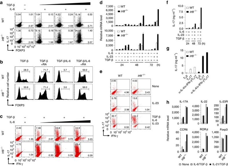 IRF8 inhibits the expression of T H 17-associated genes. Naive CD4 + T cells from wild-type and Irf8 –/– mice were stimulated with plate-bound anti-CD3 and anti-CD28 antibodies in the presence of IL-6 (10 ng ml −1 ) plus differing concentrations of TGF-β (0.1, 1, 5 ng ml −1 ) ( a ), or TGF-β (5 ng ml −1 ), TGF-β (5 ng ml −1 )/IL-6 (10 ng ml −1 ) with or without retinoic acid (RA, 100 nM) ( b ). After 4 days of stimulation, IL-17 and FOXP3 intracellular staining was performed and analysed by flow cytometry. ( c ) The cells prepared in a and b except for the presence of TGF-β (5 ng ml −1 ) plus various concentrations of IL-6 (5, 10, 50, 100 ng ml −1 ) were re-stimulated with PMA/ionomycin for 5 h and stained for intracellular IL-17 and IFN-γ and analysed by flow cytometry. ( d ) Naive CD4 + T cells from wild-type and Irf8 –/– mice were stimulated with IL-6, IL-23, TGF-β or different combinations of these cytokines for various intervals. Total RNA was extracted and analysed by RT–PCR for mRNA expression of IL-17 (top panel) and IL-17F (bottom panel). Data are from one experiment representative of three independent experiments. Error bars, s.d. ( e ) Naive CD4 + T cells from WT and Irf8 –/– mice were stimulated with the indicated cytokines for 4 days. Cells were re-stimulated with PMA/ionomycin for 5 h and stained for intracellular IL-17 and IFN-γ and analysed by flow cytometry. The results are representative of three independent experiments. ( f ) Cells were prepared as in e and the culture supernatants were collected after 4 days of stimulation. IL-17 protein secretion was analysed by ELISA. ( g ) Naive CD4 + T cells from WT and Irf8 –/– mice were prepared and stimulated with TGF-β and IL-6 in the presence of neutralizing anti-IFN-γ (10 μg ml −1 ) and anti-IL-4 (10 μg ml −1 ) antibodies. At 72 h after the stimulation, IL-17 protein secretion in culture supernatants was analysed by ELISA. Data are the mean±s.d. of triplicate cultures. ( h ) Naive CD4 + T cells from wil
