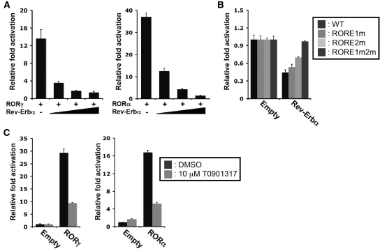 Rev-Erbα and the ROR-inverse agonist T0901317 inhibited ROR-induced activation of the Npas2 (–1534/+81) promoter. ( A ) Rev-Erbα expression represses the activation of the Npas2 promoter by RORα and RORγ, Huh-7 cells were transfected with p3xFlag-CMV10-RORγ or p3xFlag-CMV10-RORα, pGL4.10- Npas2 (–1534/+81) and increasing concentrations of p3xFlag-CMV10-Rev-Erbα and 24 h later were assayed for reporter activity. ( B ) The downregulation of basal Npas2 promoter activity by Rev-Erbα was abrogated by mutations in the ROREs. Huh-7 cells were transfected with p3xFlag-CMV10-Rev-Erbα and pGL4.10 driven by the WT Npas2 (–1534/+81) promoter or the promoter with the indicated RORE mutations. About 24 h later cells were assayed for reporter activity. ( C ) The inverse agonist, T0901317, represses the activation of the Npas2 promoter by both RORγ and RORα in Huh-7 cells. Data present mean ± SEM.