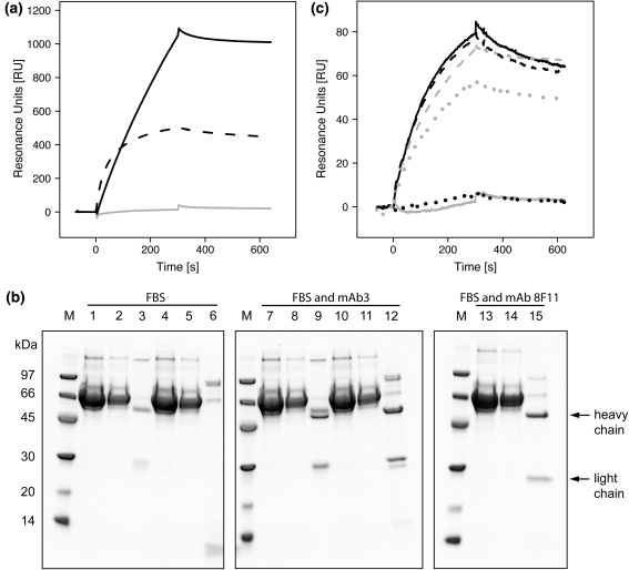 Binding studies of Z mab25 or protein G with fetal bovine serum and species selective affinity recovery of two monoclonal antibodies. a 10% FBS was flowed over a Z mab25 ( gray solid trace ) or protein G C2–C3 fragment (SPG) ( black dashed trace ) BIAcore biosensor surface. For comparison, a sample containing 10% FBS spiked with mouse IgG 1 mAb3 was also flowed over the Z mab25 surface ( black solid trace ). b : SDS-PAGE analysis (reducing conditions) of samples, flow-through (FT), and eluate (E) fractions from affinity chromatography experiments using either a protein G (SPG) column or a Z mab25 column, and samples of 10% FBS only ( lanes 1 – 6 ) or 10% FBS with in-spiked mouse IgG 1 mAb3 ( lanes 7 – 12 ) or 10% FBS with in-spiked mouse IgG 1 8F11 ( lanes 13 – 15 ). M LMW-SDS molecular weight marker; lane 1 : 10% FBS sample; lane 2 : SPG column, FT; lane 3 : SPG column, E; lane 4 : 10% FBS sample; lane 5 : Z mab25 column, FT; lane 6 : Z mab25 column, E; lane 7 : 10% FBS + mAb3 sample; lane 8 : SPG column, FT; lane 9 : SPG column, E; lane 10 : 10% FBS + mAb3 sample; lane 11 : Z mab25 column, FT; lane 12 : Z mab25 column, E; lane 13 : 10% FBS + mAb 8F11 sample; lane 14 : Z mab25 column, FT; lane 15 : Z mab25 column, E. The black arrows to the right indicate nominal molecular weights of antibody heavy and light chains, respectively. The numbers to the left indicate molecular weights in kilo Dalton (kDa). c Results from a biosensor analysis of pH neutralized eluates from the SPG and Z mab25 columns, originating from the use of the 10% FBS sample containing in-spiked mAb3 ( 1 – 4 ) or mAb 8F11 ( 5 , 6 ). On separate flow cell surfaces, anti-cow IgG and anti-mouse Ig antibodies were immobilized, and samples were injected. (1) black solid trace SPG column eluate, anti-cow IgG surface; (2) black dashed trace SPG column eluate, anti-mouse Ig surface; (3) gray solid trace Z mab25 column eluate, anti-cow IgG surface; (4) gray dashed trace Z mab25 column eluate, anti-mouse Ig 
