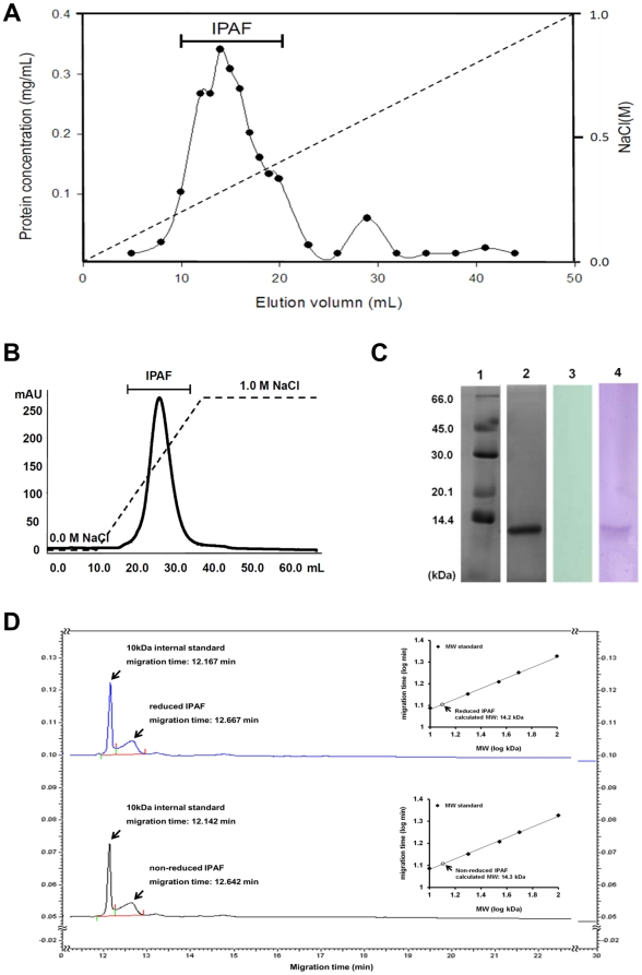 Purification and biochemical characteristics of IPAF. (A) Crude protein extracts were fractionated by a DEAE-52 cellulose column eluted with linear gradient of 0.0–1.0 M NaCl. The elution profile was generated based on protein concentration determined by BCA analysis. (B) The active fractions were further purified using FPLC system equipped with a HiTrapQ anion exchange column eluted with linear gradient of 0.0–1.0 M NaCl. The elution profile was generated by measuring the absorbance at 280 nm. (C) Purified IPAF was identified by SDS-PAGE with Coomassie brilliant blue (lane 2) and periodic acid-Schiff staining (lane 3). Purified IPAF was transferred to PVDF membrane and identified via western blot using a self-made mAb against IPAF (lane 4). The molecular weight of IPAF was determined by comparing with pre-stained protein markers (lane 1). (D) Gel-filtration capillary electrophoresis SDS-MW analysis of IPAF prepared under reducing or non-reducing condition. The MW was derived by normalizing the migration time of the samples with the 10 kDa internal standard, and calibrated with the standard curve constructed with the protein size standard.