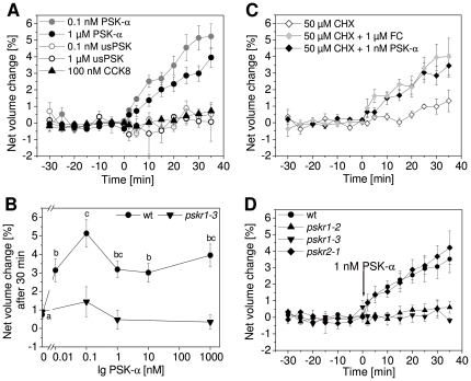 Protoplasts from the Arabidopsis hypocotyl expand in response to PSK-α. Protoplasts were isolated from etiolated hypocotyls and their volume was determined at 5 min intervals. After 30 min, at t = 0 min, effectors were added and protoplast volumes were recorded for another 35 min. (A) Addition of 0.1 nM or 1 µM PSK-α caused a rapid and continuous increase in protoplast volume whereas unsulfated PSK peptide (usPSK) or 100 nM of the sulfated peptide CCK8 did not (n = 3–5, P