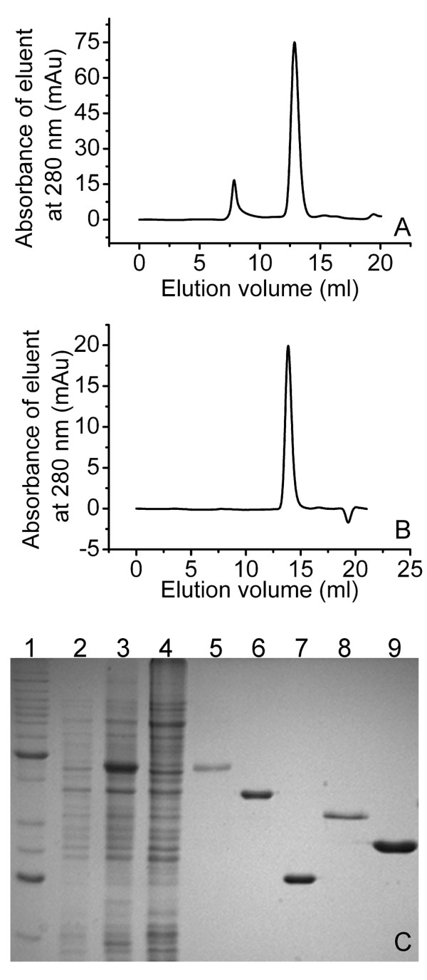 Purification of SXT-Exo and lambda-Exo, and determination of their multimericity by size exclusion chromatography . Panel A : Size exclusion chromatogram of purified SXT-Exo protein expressed from plasmid pEA1-1. Panel B : Size exclusion chromatogram of purified lambda-Exo protein expressed from plasmid pEE4. Panel C : 12% polyacrylamide gel (SDS-PAGE) analysis of the SXT-Exo purification procedure and purified SXT-Bet, SXT-Ssb, lambda-Bet and lambda-Exo proteins; lane 1: Benchmark protein ladder (Invitrogen); lane 2: pEA1-1/ E. coli <t>BL21</t> (DE3) <t>pLysS</t> <t>Rosetta</t> whole cell extract immediately prior to induction; lane 3: whole cell extract 6 hours after induction with IPTG; lane 4: supernatant from cell extract 6 hours post induction; lane 5: purified SXT-Exo; lane 6: purified SXT-Bet expressed from pX28-1; lane 7: purified SXT-Ssb expressed from pSB2; lane 8: purified lambda-Bet expressed from p1DB; lane 9: purified lambda-Exo expressed from pEE4.