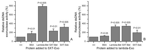 Stimulation of double strand DNA exonuclease activities of SXT-Exo and lambda-Exo by SSAP and Ssb proteins . Panel A . SXT-Exo (2 pmol of trimers), PstI-linearized pUC18 (5 ng, 0.003 pmol) and 2 pmol of the protein indicated in the text (BSA, lambda-Bet, SXT-Bet or SXT-Ssb) in Tris-HCl (25 mM, pH7.4), 50 mM NaCl, 0.5 mM MnCl 2 ; were incubated at 25°C for 30 mins before EDTA quenching. dsDNA levels were immediately quantified using PicoGreen reagent. The level of DNA digestion by SXT-Exo in the absence of added protein (-) was normalized to a value of 100%. Panel B . In analogous sets of experiments, lambda-Exo (2 pmol of trimers), PstI-linearized pUC18 (5 ng, 0.003 pmol) and 2 pmol of BSA, lambda-Bet, SXT-Bet or SXT-Ssb; in Tris-HCl (25 mM, pH7.4), 50 mM NaCl, 5 mM MgCl 2 ; were incubated at 25°C for 10 mins. Digestion levels were normalized to those of lambda-Exo in the absence of added protein (-). See methods section for detailed experimental procedure. Six independent replicates were performed for each experiment, and error bars indicate standard deviation from the mean values. Analysis using ANOVA indicated all results were statistically significant (P