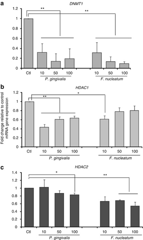 Differential decreased mRNA expression of HDAC1, HDAC2 and DNMT1 in gingival epithelial cells in response to various doses of oral bacteria. mRNA expression of ( a ) DNA methyltransferase (DNMT1), ( b ) histone deacetylase 1 (HDAC1), and ( c ) histone deacetylase 2 (HDAC2) are differentially decreased in gingival epithelial cells (GECs) in response to various doses of Porphyromonas gingivalis vs. Fusobacterium nucleatum . GECs were stimulated with P. gingivalis (Pg) or F. nucleatum (Fn) at multiplicities of infection (MOIs) of 10:1, 50:1, 100:1, and 200:1 for 24 h. Changes in mRNA expression were evaluated by quantitative real-time PCR (QRT-PCR) and results are expressed as fold change in gene expression compared with the unstimulated control after normalization with the housekeeping gene glyceraldehydes-3-phosphate dehydrogenase ( GAPDH ). The data are derived from three different cell donors tested in duplicate. Error bars indicate s.e.m. Asterisks indicate statistically significant difference compared with unstimulated control (Ctl) (* P