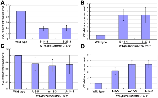 Expression of FLC and FT in AtBMI1C -overexpressing lines. (A) Expression of FLC in AtBMI1C -overexpressing lines harboring p35S::ATBMI1C-YFP as determined by quantitative real-time RT-PCR. (B) FT expression in AtBMI1C -overexpressing lines harboring p35S::AtBMI1C-YFP as determined by quantitative real-time RT-PCR. (C) FLC expression in transgenic lines harboring pAP1::AtBMI1C-GFP as determined by quantitative real-time RT-PCR. (D) FT expression in transgenic lines harboring pAP1::AtBMI1C-GFP as determined by quantitative RT-PCR. Total RNA was isolated from ten-day-old transgenic or wild-type seedlings. FLC or FT expression was measured by quantitative real-time RT-PCR using ACTIN2/7 as an endogenous control. The values are the mean ± SD of three independent experiments.