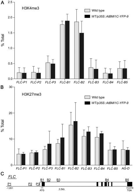 ChIP analysis of H3K4me3 and H3K27me3 at FLC chromatin. (A) H3K4 trimethylation levels at FLC chromatin between wild type and an ATBMI1C -overexpressing line harboring p35S::AtBMI1C-YFP . (B) H3K27 trimethylation levels at FLC chromatin between wild type and AtBMI1C -overexpressing lines harboring p35S::AtBMI1C-YFP . Anti-H3K4me3 or -H3K27me3 antibodies were used for the assay. The locations of the primer pairs used to amplify FLC fragments across the region are indicated in (C). The values are the mean ± SD of three independent experiments.