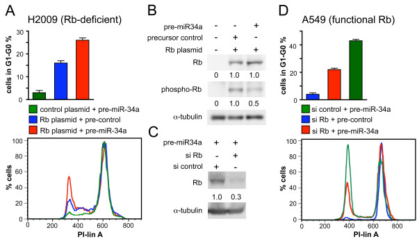 miR-34a -induced cell cycle arrest depends on the expression of Rb . (A, D), DNA content distribution by flow cytometry of H2009 (A) and A549 cells (D) treated for 18 h with nocodazole beginning 48 h post-transfection. The percent cells in G 1 -G 0 is shown in the upper panel (n = 3) and a representative histogram of the cell cycle profile is shown in the lower panel. (B, C), Western blot analysis of H2009 (B) and A549 cells (C) subjected to the same conditions as in (A) and (D) using antibodies directed against Rb or phospho-Rb. Protein levels were normalised to α-tubulin.