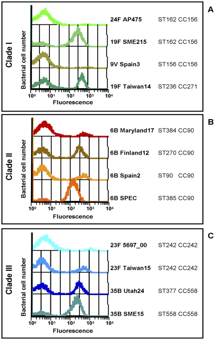 Pilus expression ratio is not correlated with serotype, genotype or clade type. Bacteria containing either PI-1 clade I (A), clade II (B) or clade III (C), were labeled with clade specific anti-RrgB antibodies (1∶400 dilution) and FITC anti-mouse IgG secondary antibodies (1∶100 dilution). Pilus-1 expression was then analyzed by flow cytometry (FACS-Calibur).